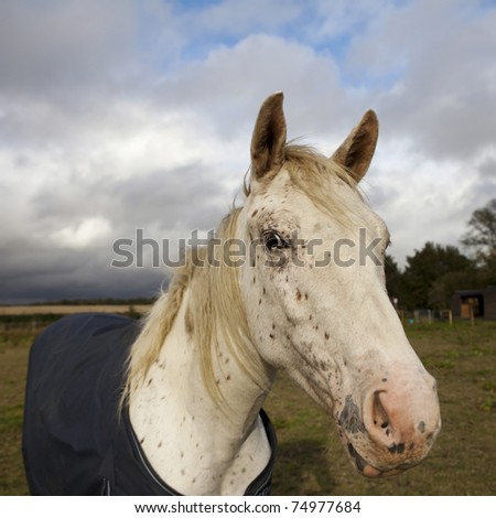 White horse in the coat at farm in autumn #74977684