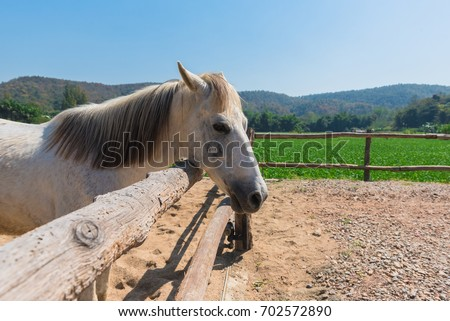 white horse in the farm and good landscape #702572890