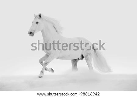 white horse in the snow Stock fotó ©