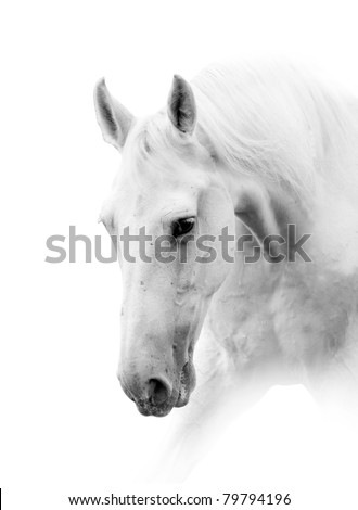 white horse isolated in high key