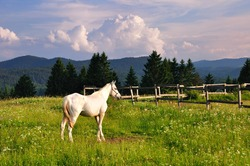 White horse on green grass in mountain