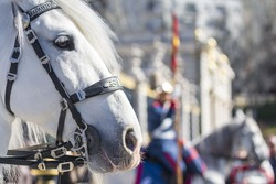 White horse participates in the Changing of the Guard at Royal Palace in Madrid, Spain.