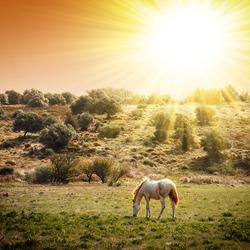 White horse pasturing in a rural landscape under warm sunlight