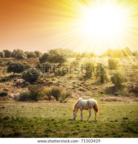 White horse pasturing in a rural landscape under warm sunlight