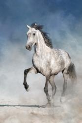 White horse play fun in sandy field