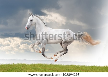 white horse running free in summer stock photo 102894395 horse for free 450x319