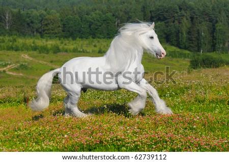 Leiran Karakterei Stock-photo-white-horse-runs-gallop-on-the-meadow-in-summer-62739112