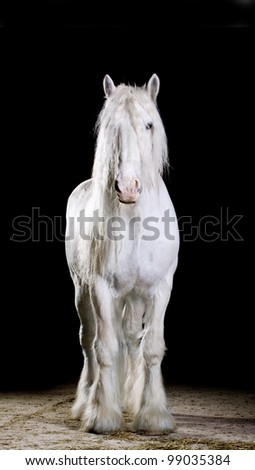 white horse studio shot