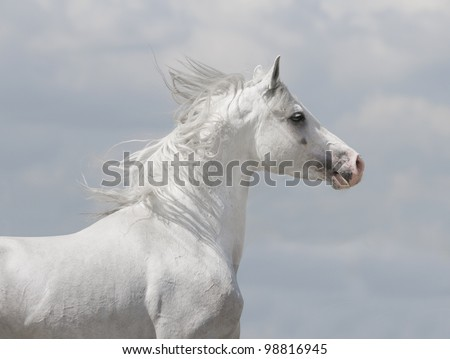 white horse with blue sky behind