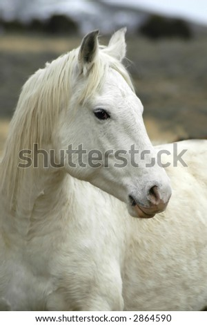 white horse with blurred background