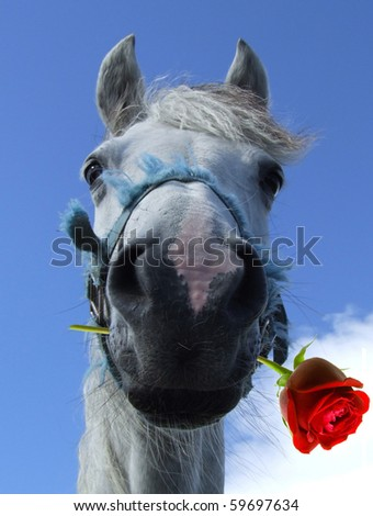 White horse with red rose between lips humerous