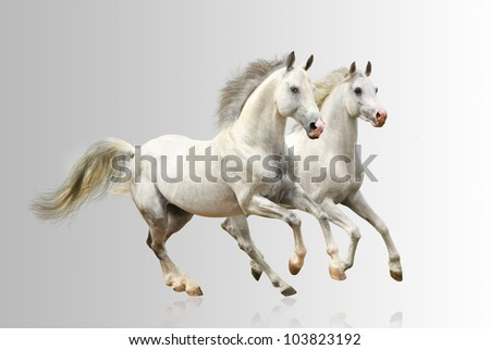 white horses - stock photo