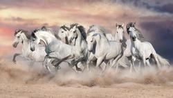 White horses free run in desert against beautiful sky