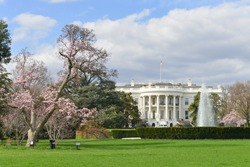 White House in springtime - Washington DC during cherry blossom festival