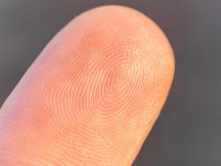 white human fingerprint macro detail