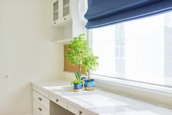 White interior background, close-up abstract details, painted light table, roman blinds, window, blue flowerpots with house plants on the desk. Interior, design, home