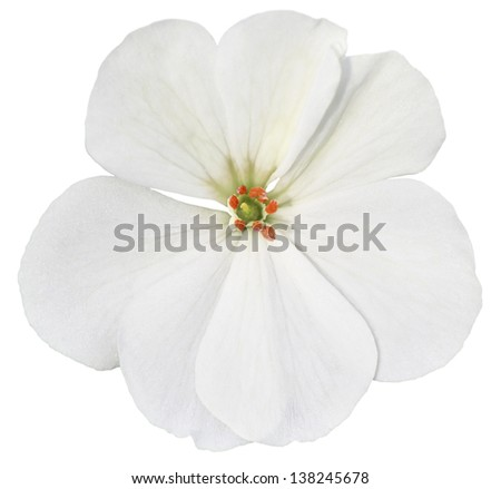 White isolated flower