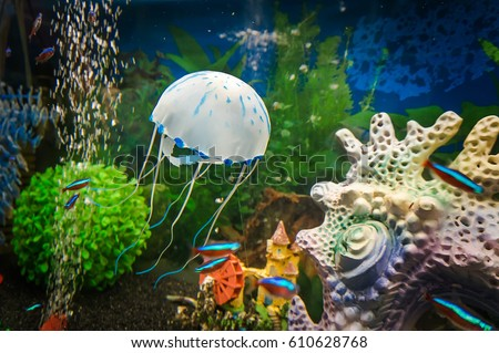 Stock Photo White jellyfish in the aquarium with crystal clear water on a beautiful underwater background with corals and seaweed and aquarium fish.