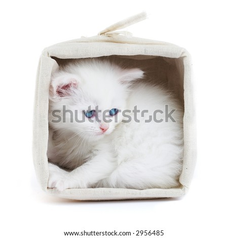 White kitten in a basket...Studio shot.