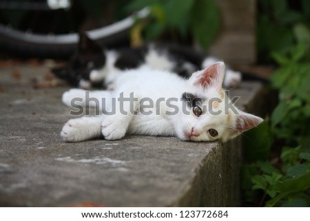 White kitten lying on the ground