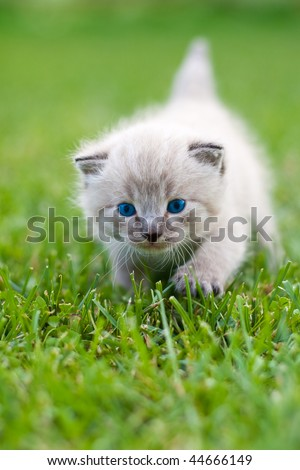 White kitten on the grass. Selective focus.