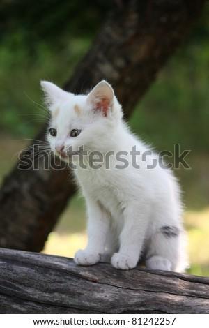 White kitten sitting on the branch