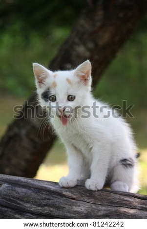 White kitten sitting on the branch and yawning - stock photo