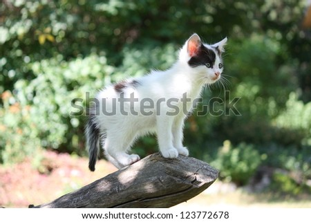 White kitten standing on the tree branch exploring