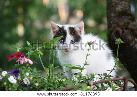 White kitten with black markings sitting in the flower bed