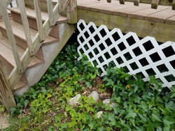 white lattice fence on wood deck and green ivy