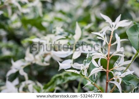 white leaves #532467778