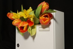 white letterbox filled with a bouquet of tulips