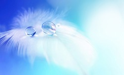 White light airy soft feather with transparent drops of water on light blue background. Delicate dreamy exquisite artistic image of purity and fragility of nature.