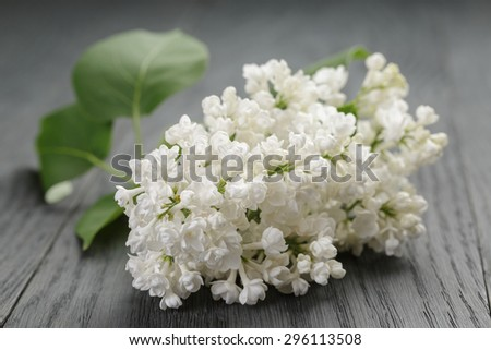 white lilac flower on old oak table, summer rustic flowers