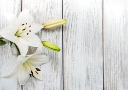White  lilies on a old wooden background