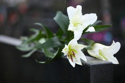 White lilies on black granite tombstone outdoors, closeup. Funeral ceremony