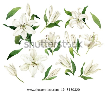 White lilies watercolor clipart set. Gentle white flowers isolated on white background. Clipart for greeting cards, wedding invitations, birthday cards, stationery. Foto stock ©