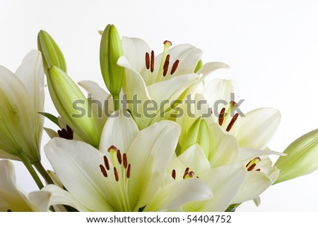 White Lily flowers on white background studio shot