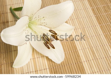 White lily on bamboo background.