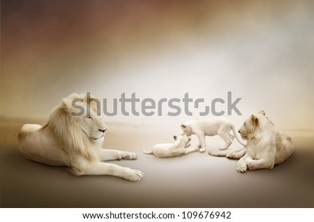 White lion family