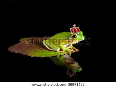 White-lipped tree frog prince with golden crown