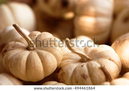 White Lumina Pumpkins #494461864