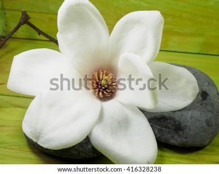 White magnolia flowers ez canvas white magnolia flowers mightylinksfo
