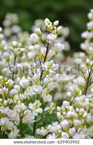 White meadow flowers ez canvas white meadow flowers mightylinksfo