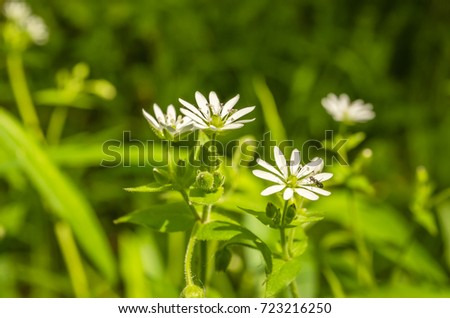 Free photos black and white meadow flowers grass in nature white meadow flowers 723216250 mightylinksfo