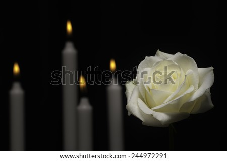 White memorial rose with candles