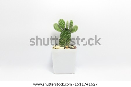 White minimal cactus in a jar. Succulents. Potted small house plants, home interior.The strange shape of the cactus look like a foot.