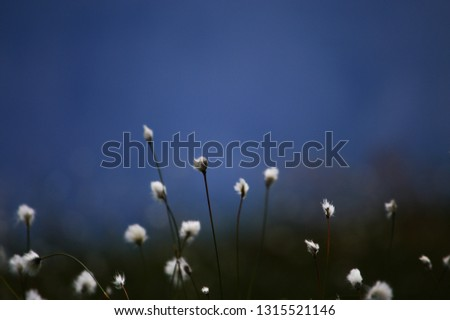 White Mountain Flowers on blue Background #1315521146