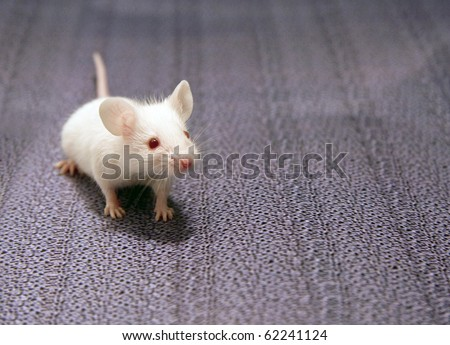 white mouse sitting on a grey background
