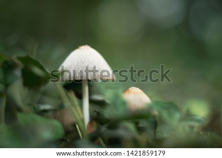 White mushrooms in a forest